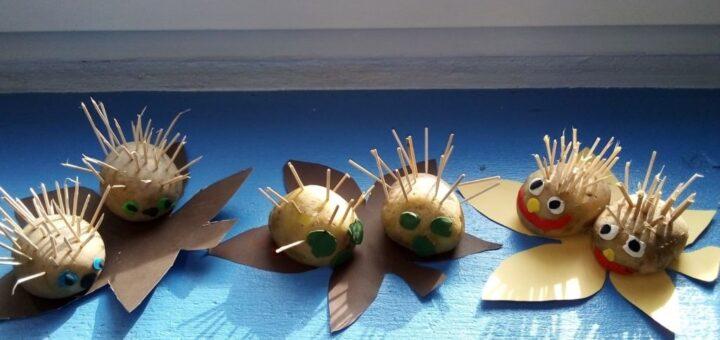 wystawa ziemniaczanych jeży:)