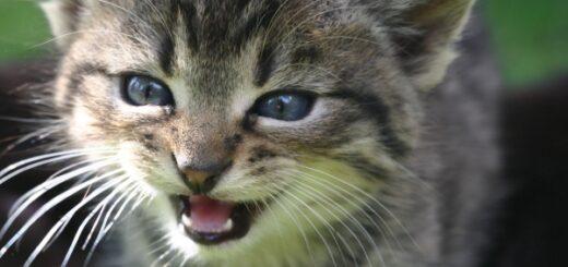 zdjęcie kota